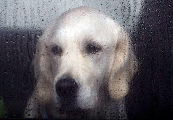 dogs like rain