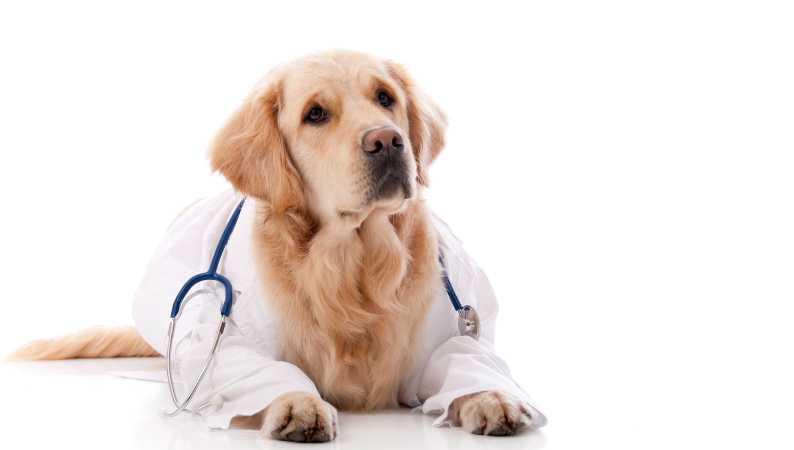 what makes a good vet