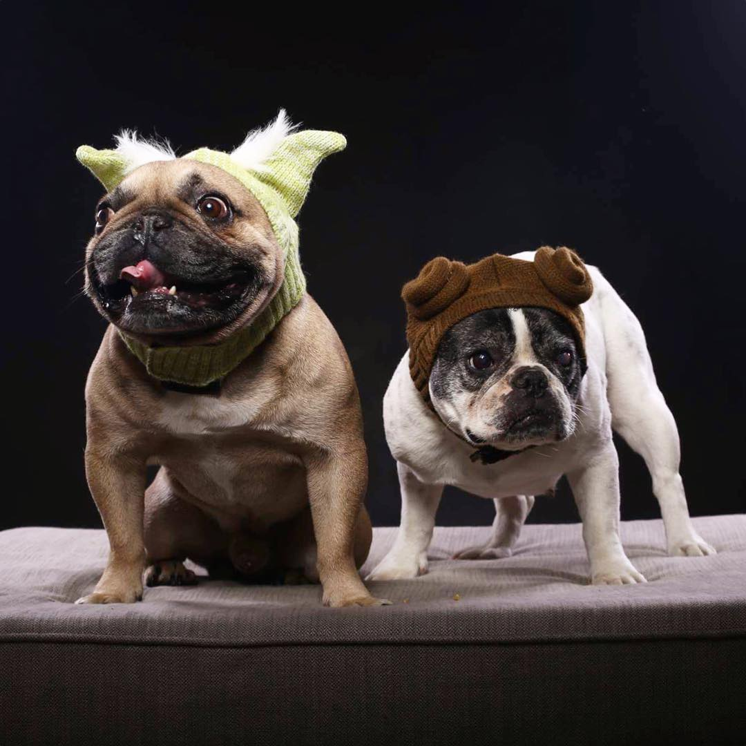 pets celebrating star wars