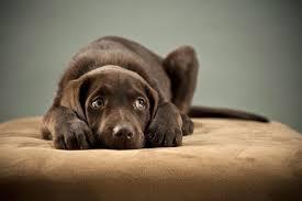 anxious dog