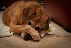 dog bad breath