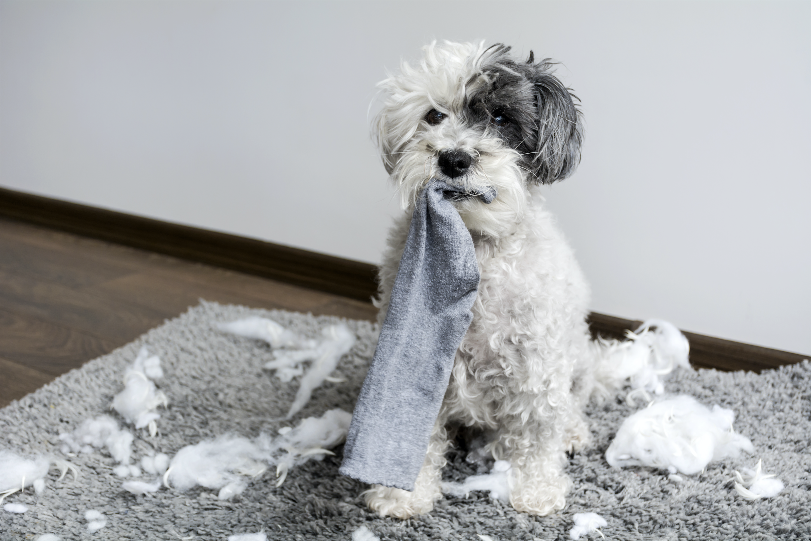 How To Stop Your Dog Chewing | Mad Paws Blog