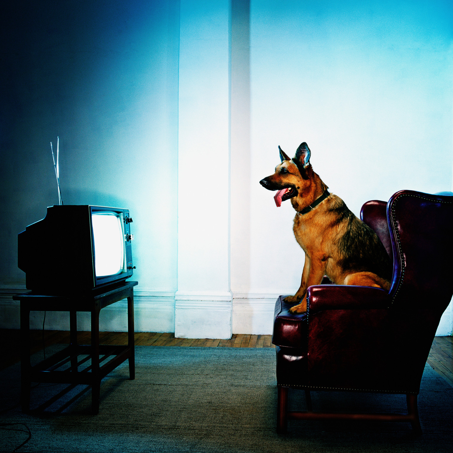 Image result for dog watching tv