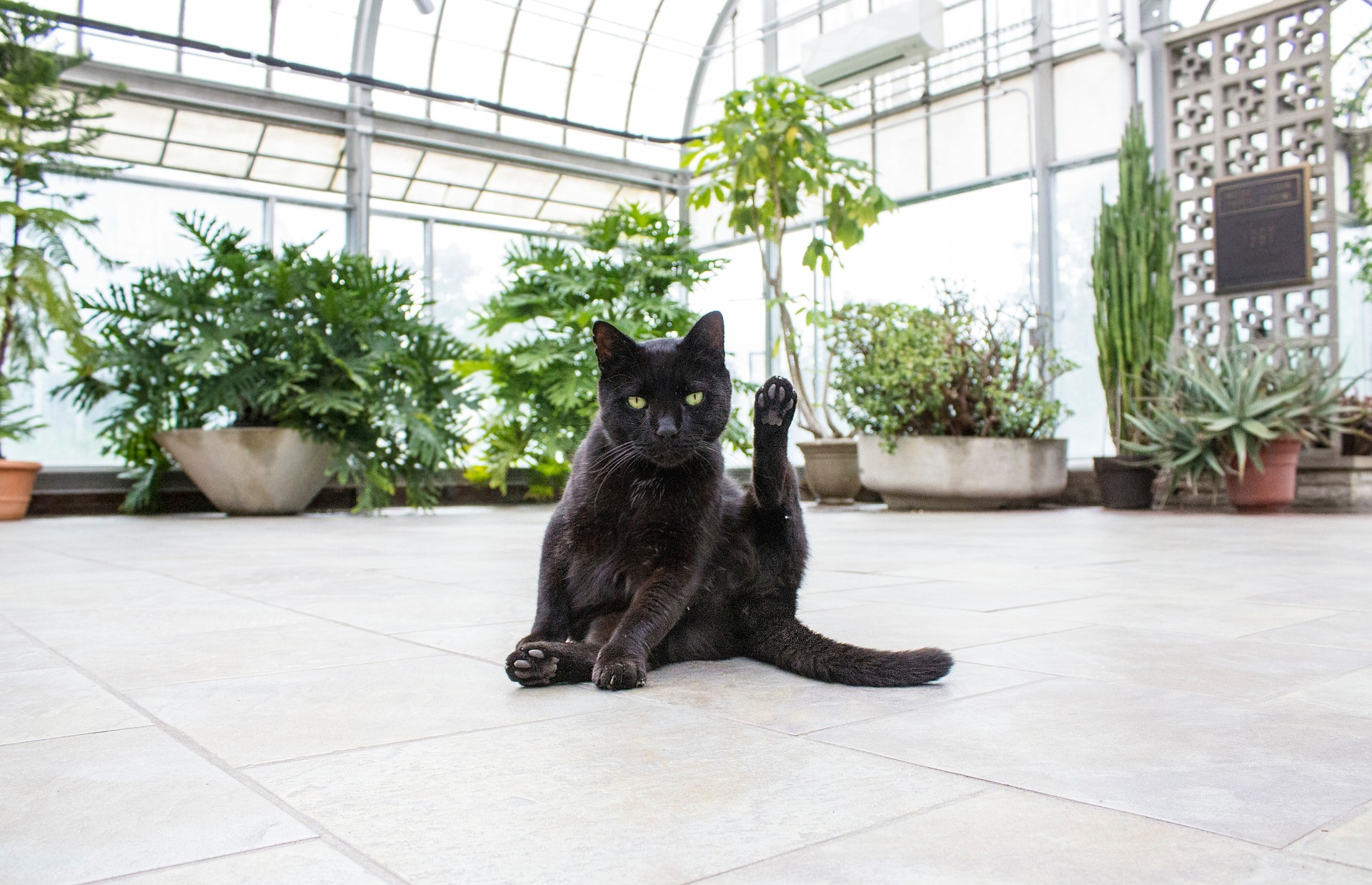 poisonous plants for cats mad paws blog. Black Bedroom Furniture Sets. Home Design Ideas