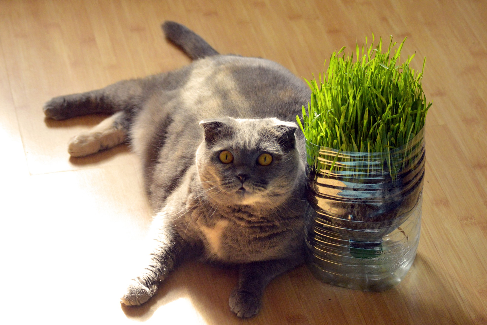 how can i help my cat lose weight? | mad paws blog