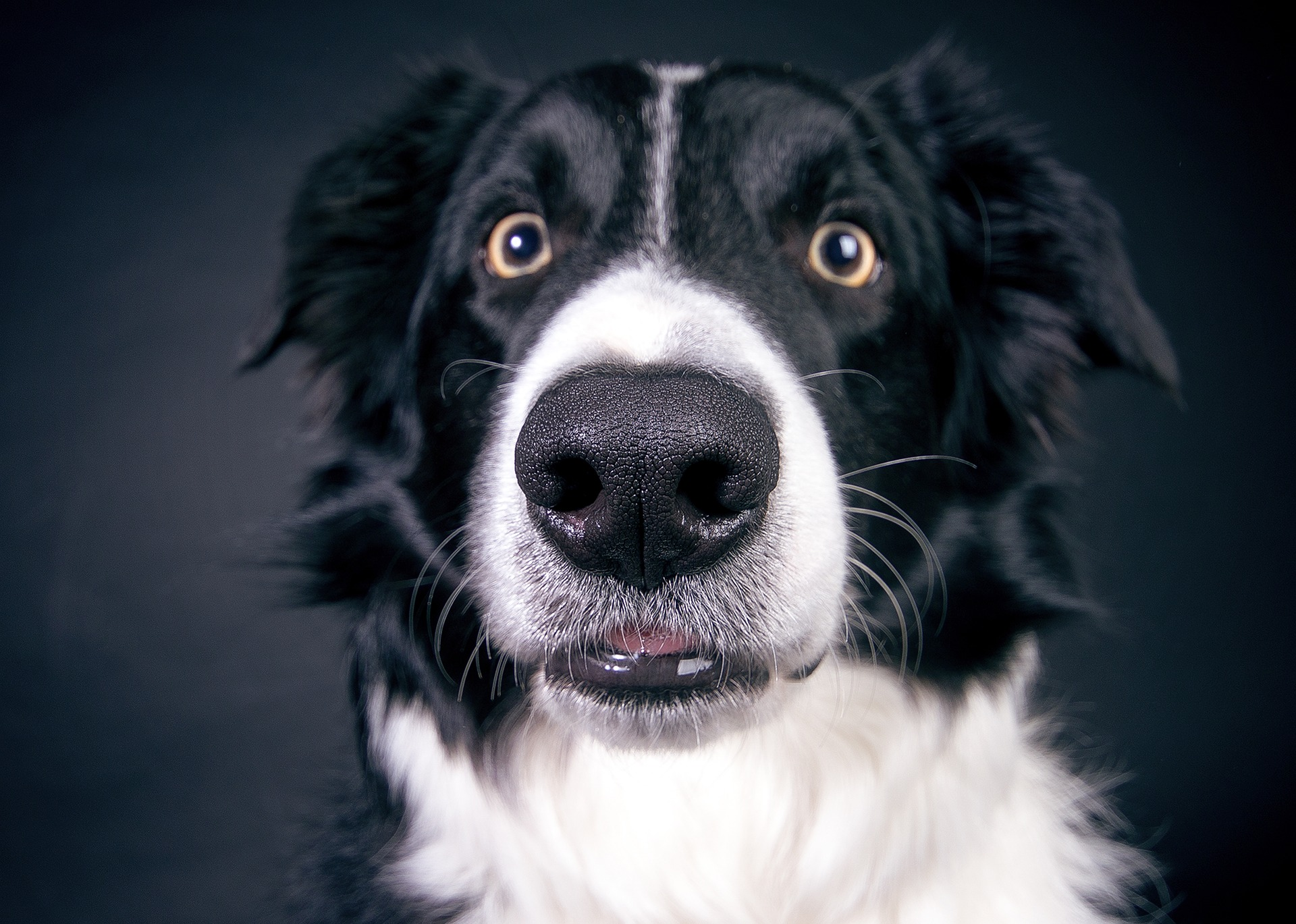 Dogs decipher our expressions