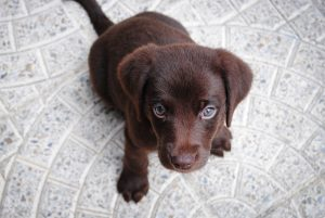 Emergency Essentials for Dogs and Puppies