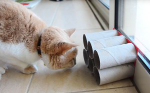 More DIY Cat Toys Made from Toilet Paper Rolls