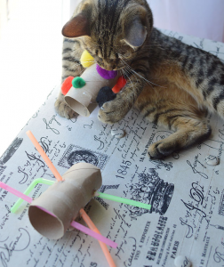 Cat Toys Made from Straws and Toilet Paper Rolls