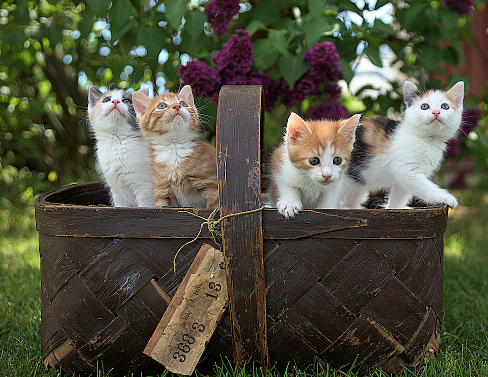 Cats and Kittens that Fit inside a Basket