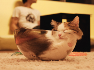 A cat that has fit inside a mixing bowl