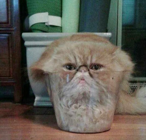 A cat fit inside a small plastic container