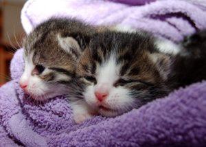 Raise a Kitten