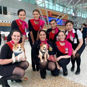 Dogs and Airport Staff