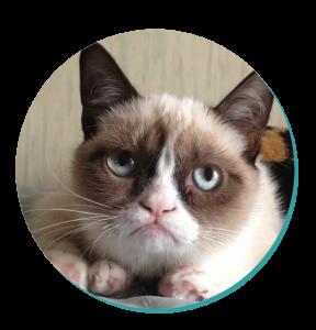 Snowshoe Cat Breed Grumpy Cat