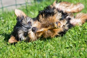 Dog Eating Healthy