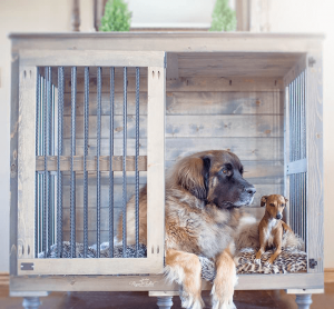 Crate Training with Two Dogs