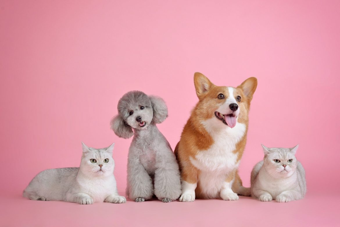 How to care for multiple pets in one Sitting