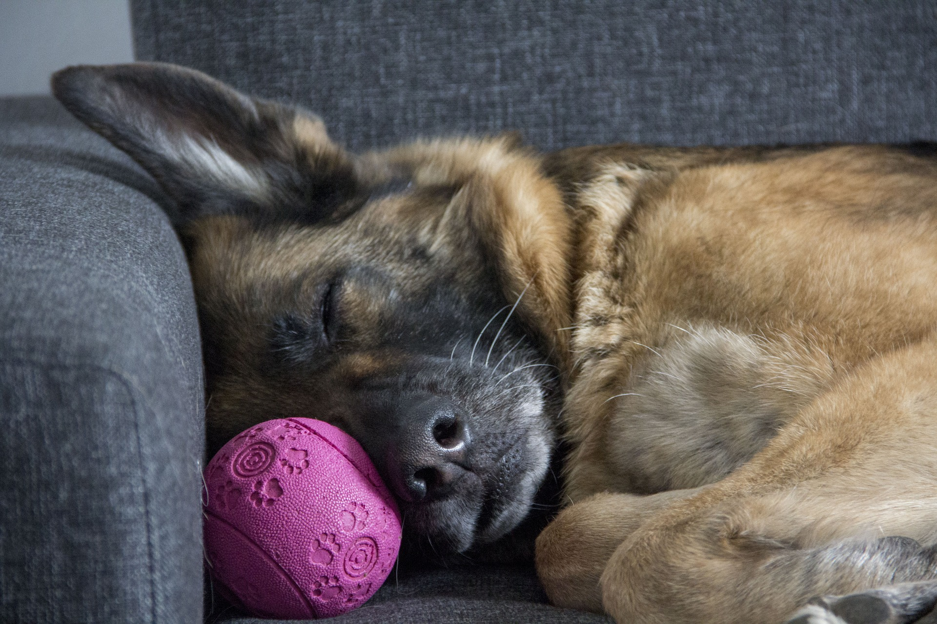 Learn about Your Dog from Their Sleeping Position | Mad Paws