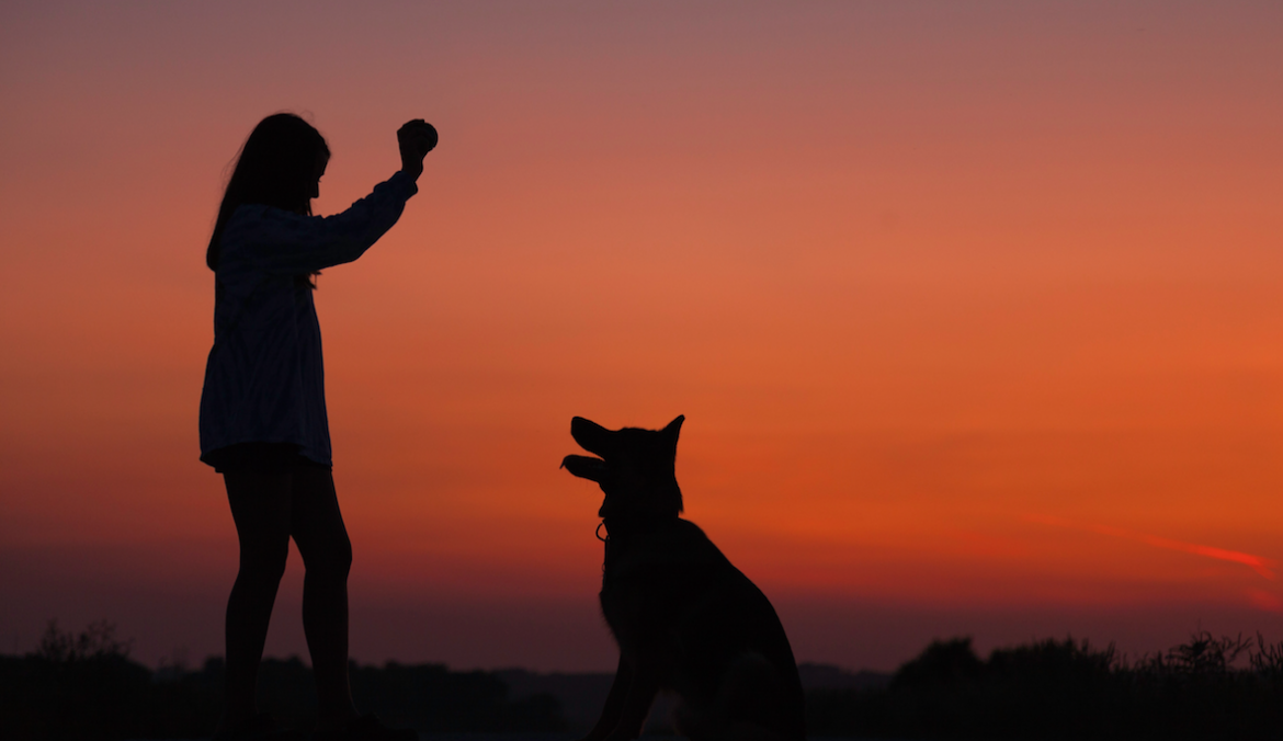 Dog Trainer Advice for Pet Sitting