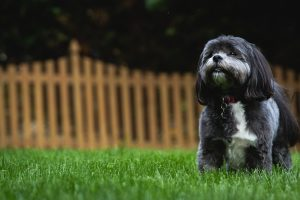 5 Tips to Stop Your Neighbours Complaining about Your Dog