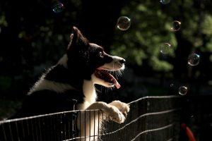 Dog-Proof Fence