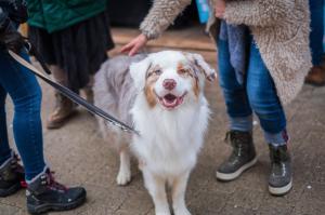 Should Strangers Pet Your Dog?