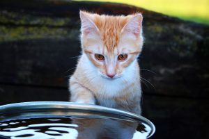 Cats Afraid of Water