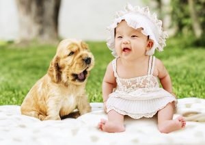 Introducing Dogs to Babies