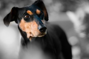 Facts about Your Dog's Senses
