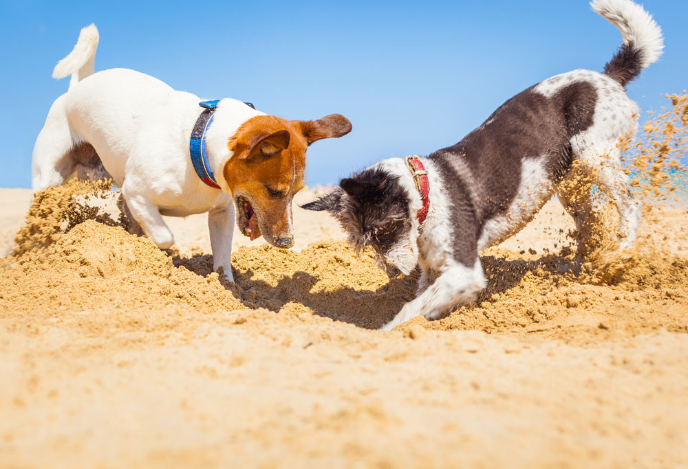 Why Do Dogs Bury Their Favourite Things? | Mad Paws Blog