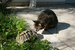 Unlikely Pairings between Cats and Other Animals