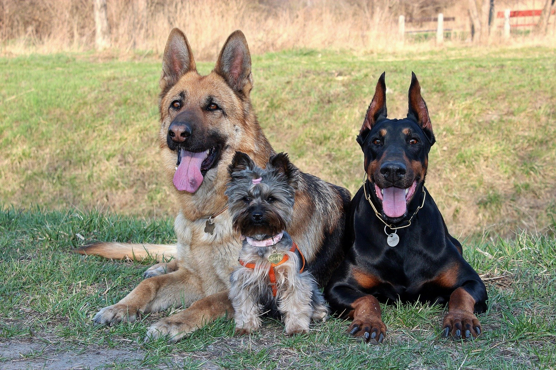 https://www.madpaws.com.au/wp-content/uploads/2020/02/Most-Loyal-Dog-Breeds.jpg