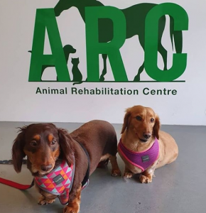 Doxies Down Under Top Instagram Dogs