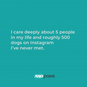 Top Instagram Dogs Mad Paws