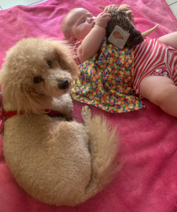 Pet Sitting Furry Client and Pet Sitter's Baby