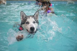 Most Energetic Dog Breeds