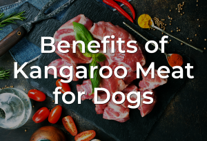 Benefits of Kangaroo Meat for Dogs