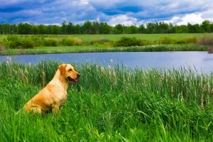 Should City Dogs Spend Time in the Country?