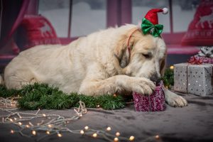 Which Christmas Foods Should My Dog Avoid?