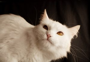 Can Cats Learn to Change Their Behaviour?