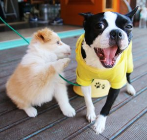 Top Dog-Friendly Restaurants