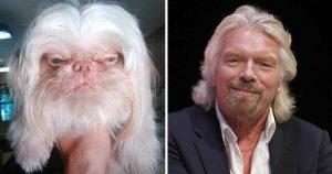 Richard Branson Dog