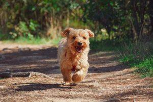 Enrich Your Dog
