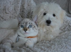 How to Get Your Dog to Like Cats