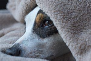 Train Your Dog to Sleep