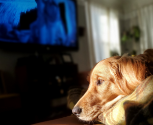 What Do Dogs Think About TV?