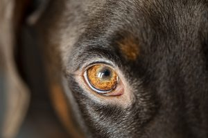 Are Dogs Colour Blind