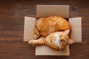 Why Do Cats Love Sitting in Boxes?