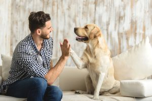 How Do Dogs Communicate with Humans?